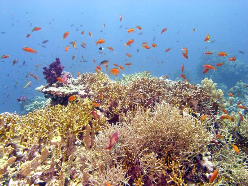 Scena della scogliera con corallo ed i pesci fotografia stock