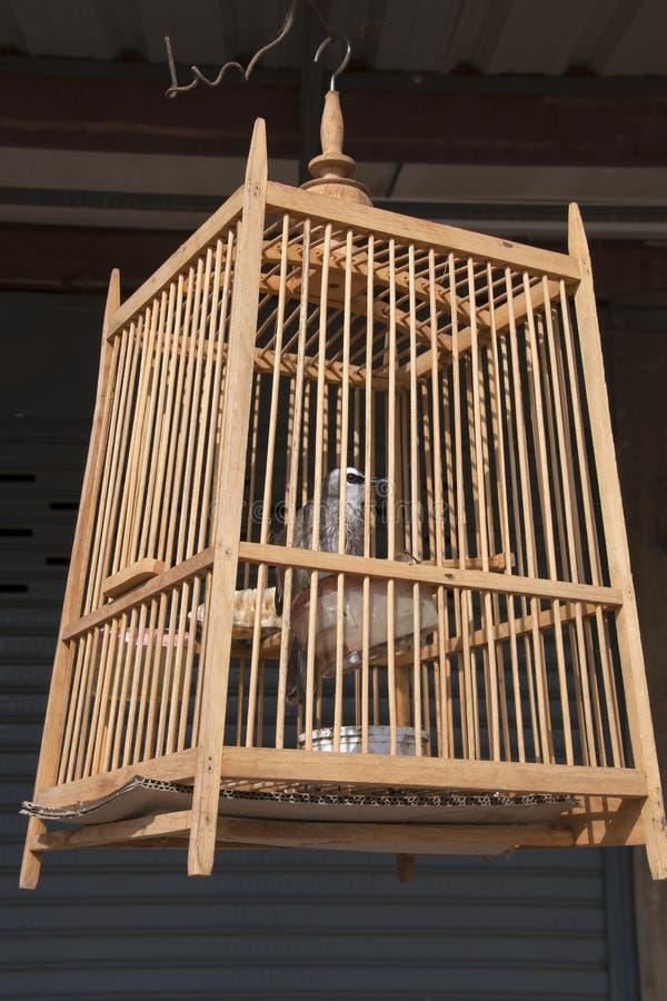 Scena della via con l'uccello nella caduta della gabbia in sole di mattina fotografia stock