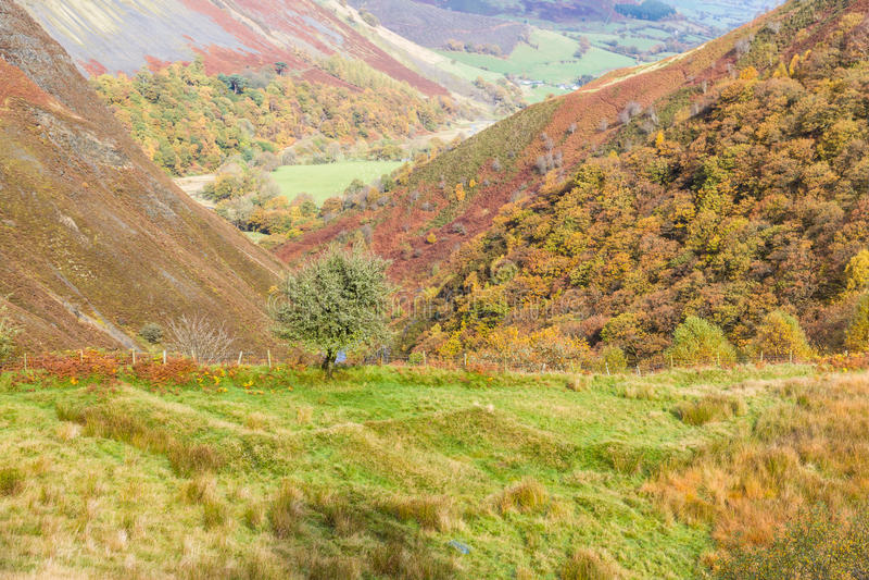 Scena di Autumn Fall, erba ed alberi, Galles, Regno Unito immagini stock