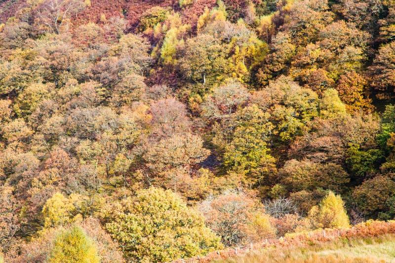 Scena di Autumn Fall, erba ed alberi, Galles, Regno Unito fotografie stock libere da diritti