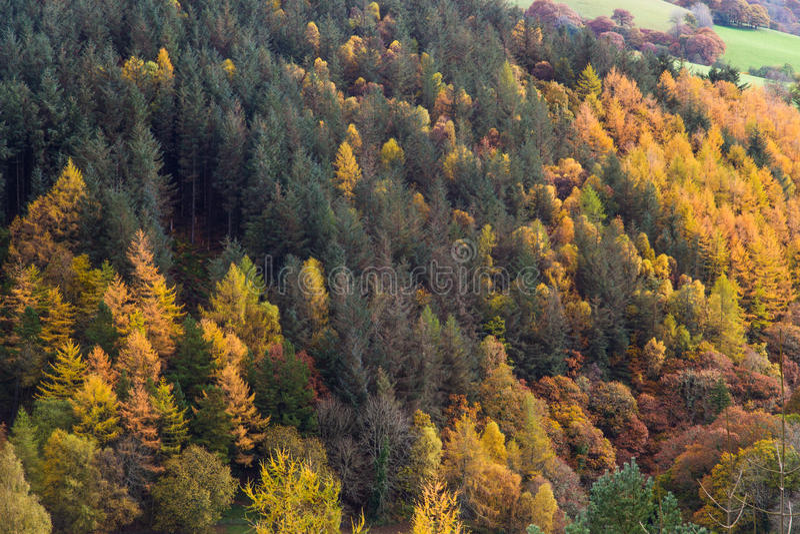 Scena di Autumn Fall, erba ed alberi, Galles, Regno Unito fotografia stock