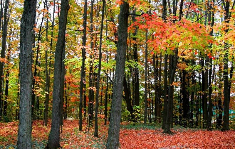 Scena di autunno fotografia stock