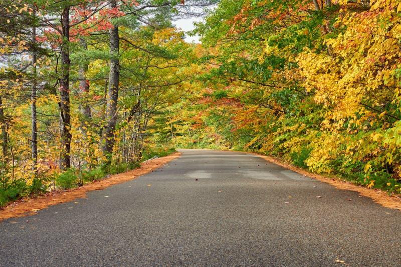 Scena di autunno con la strada fotografia stock