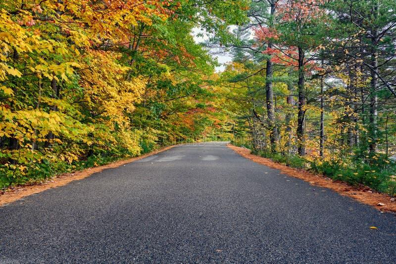 Scena di autunno con la strada immagine stock libera da diritti