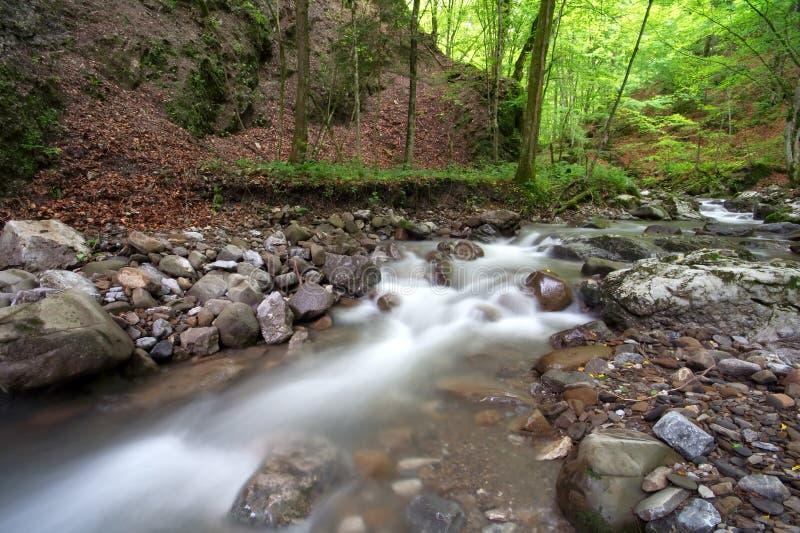 Scena di autunno della foresta fotografie stock libere da diritti
