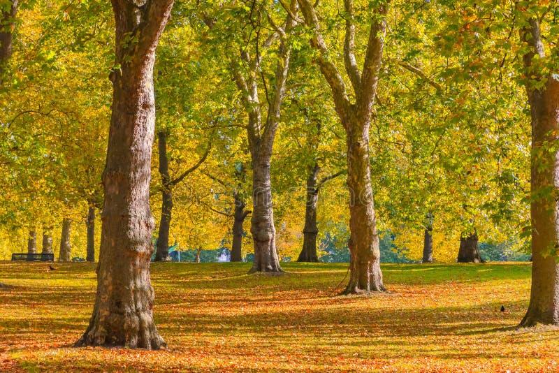 Scena di autunno in Green Park, Londra immagini stock