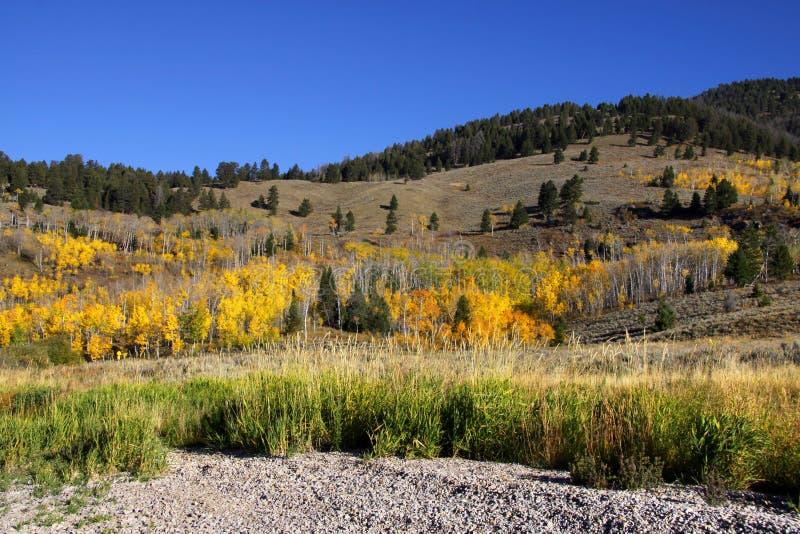Scena di autunno nel Wyoming immagini stock