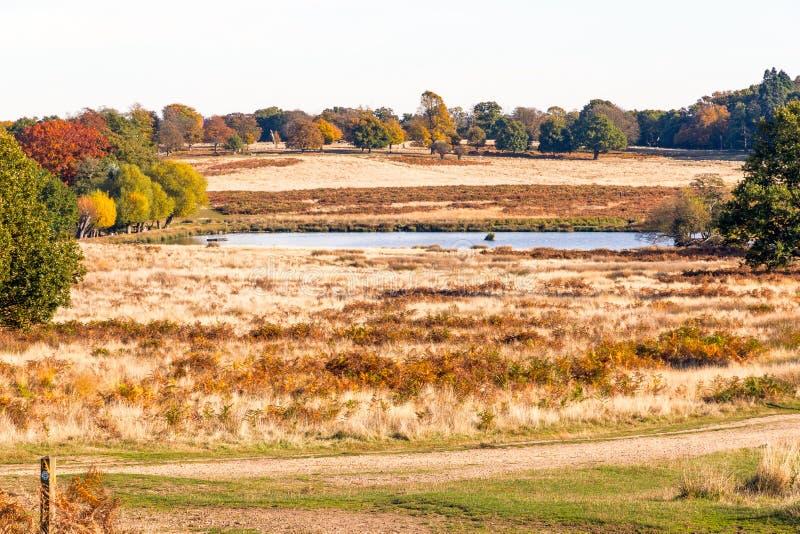 Scena di autunno in Richmond Park immagine stock libera da diritti