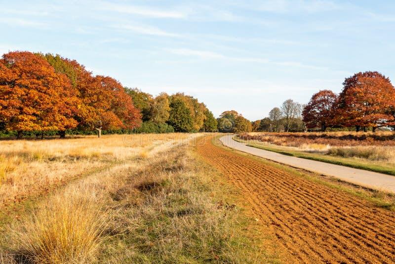 Scena di autunno in Richmond Park fotografie stock libere da diritti