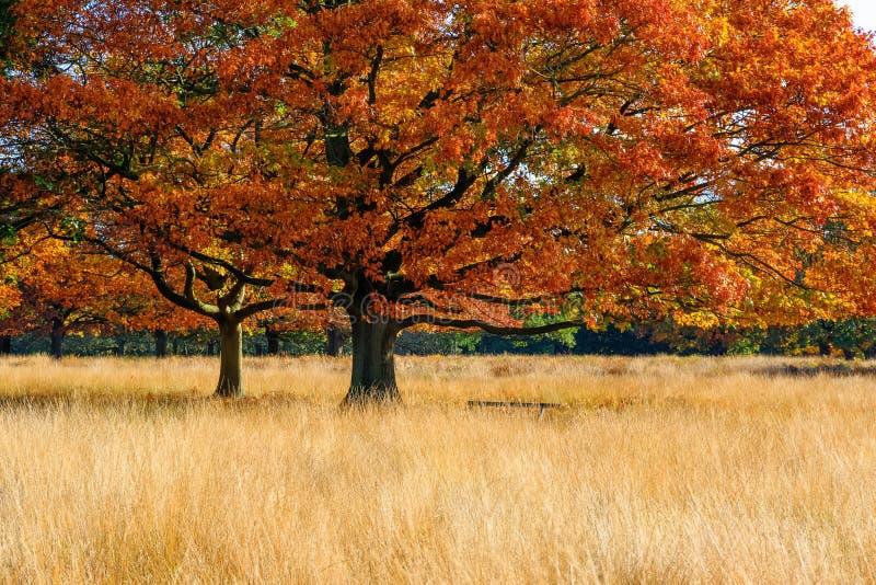 Scena di autunno in Richmond Park fotografia stock libera da diritti