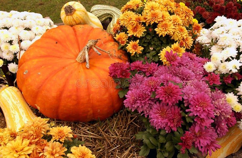 Scena di caduta con la zucca ed i fiori immagini stock libere da diritti