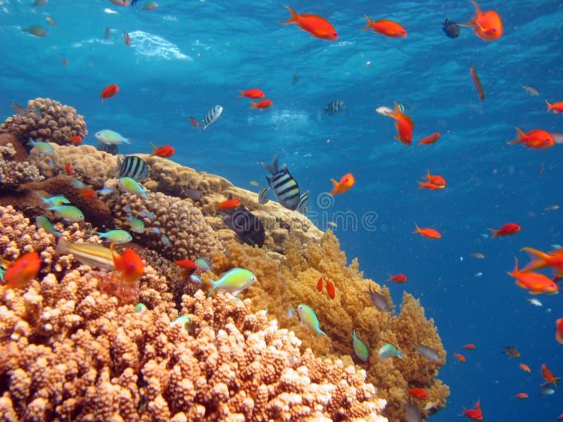 Download Scena di corallo fotografia stock. Immagine di animale - 3886732