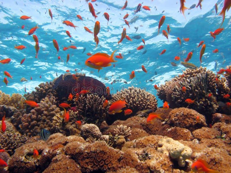 Download Scena di corallo immagine stock. Immagine di rosso, colonia - 3886735