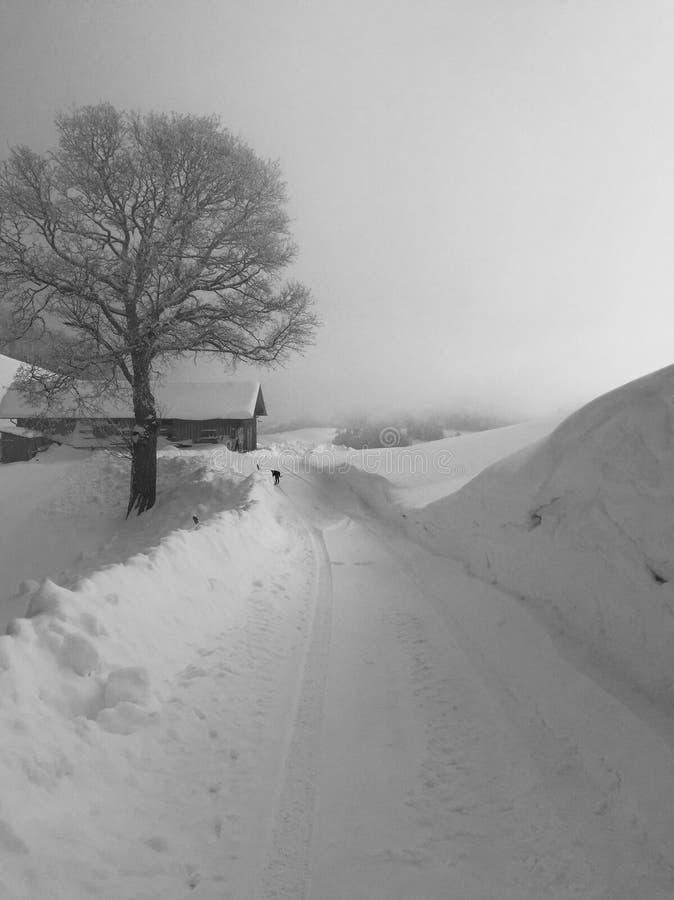 Scena di inverno fotografie stock