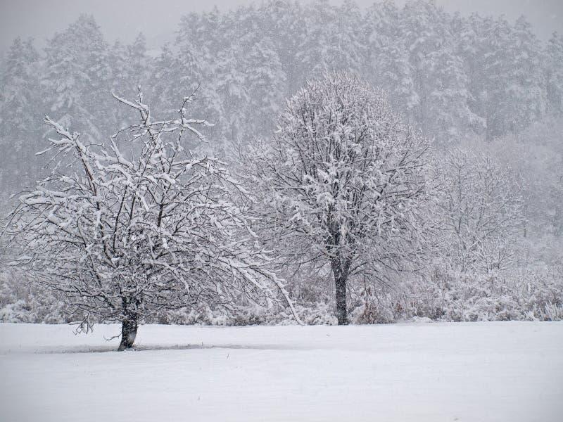 Scena di inverno fotografia stock