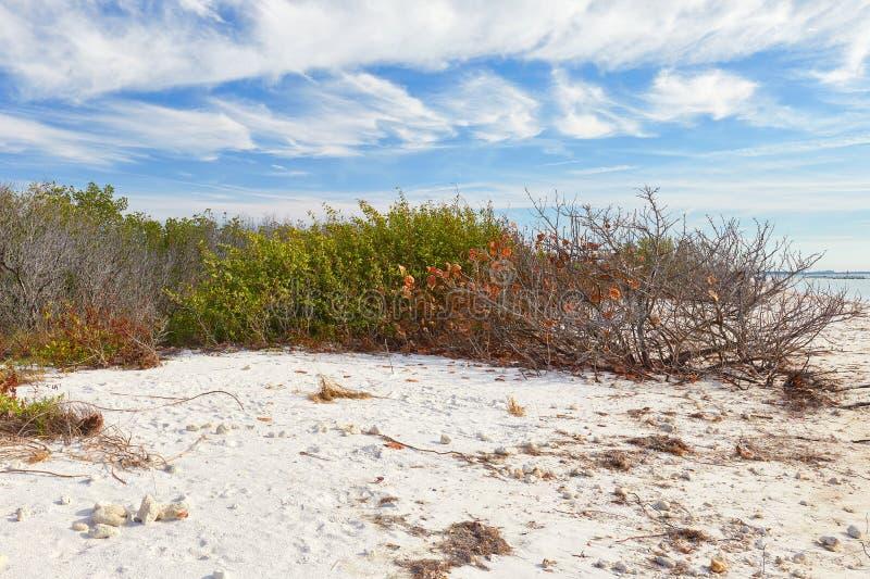 Scena di inverno al parco di stato dell'isola di luna di miele, Florida fotografia stock libera da diritti