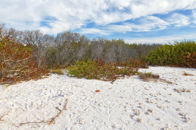 Scena di inverno al parco di stato dell'isola di luna di miele, Florida immagini stock libere da diritti