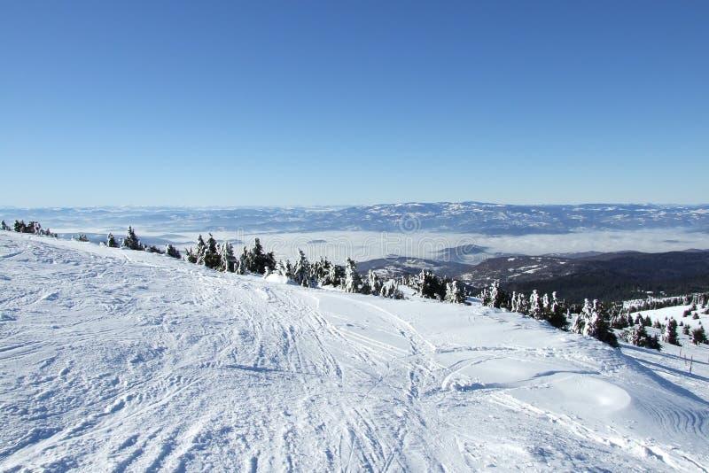 Scena di inverno della neve su Kopaonik   fotografia stock