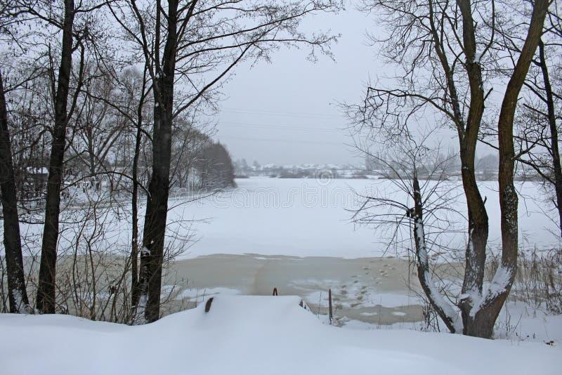 Scena di inverno dello stagno congelato e degli alberi coperti in neve immagine stock