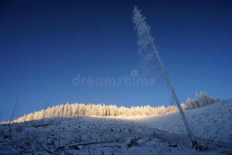 Scena di inverno di sera immagini stock