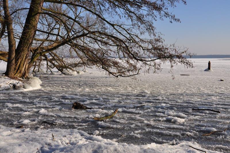 Scena di inverno: lago ed albero congelati fotografie stock libere da diritti