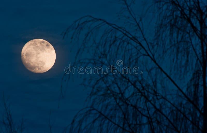 Scena di notte della luna piena immagini stock libere da diritti