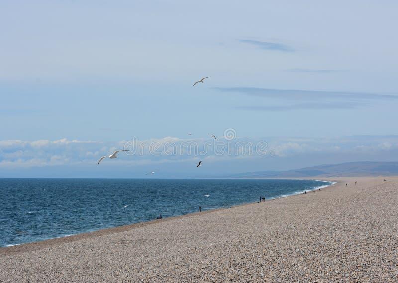 Scena di Pebble Beach con i gabbiani fotografia stock libera da diritti
