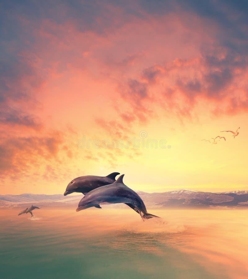 Scena di rappresentazione del delfino che salta attraverso l'acqua di mare immagine stock libera da diritti