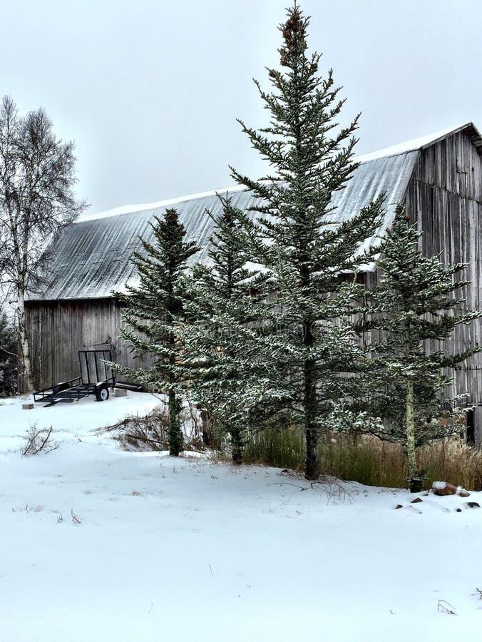 Scena di Snowy fotografie stock libere da diritti
