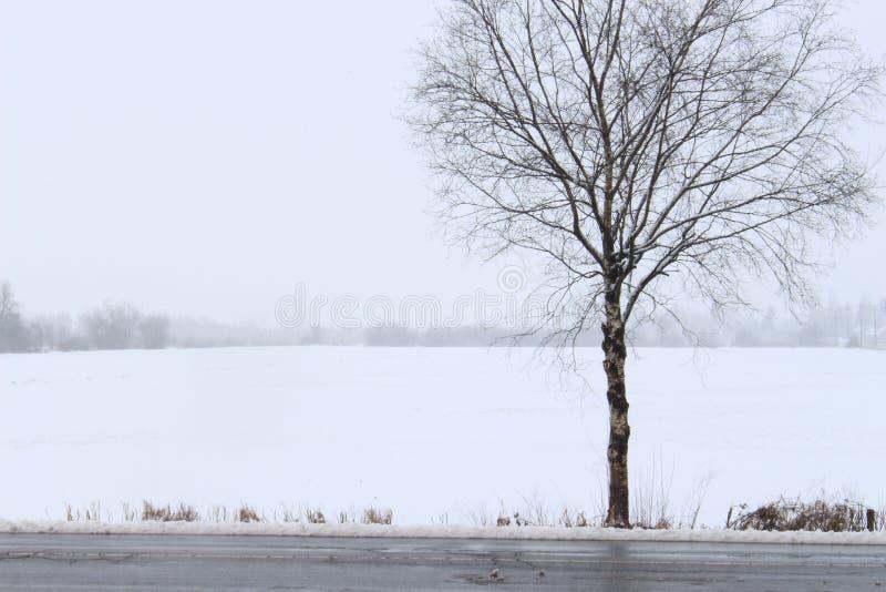 Scena di Snowy immagine stock libera da diritti