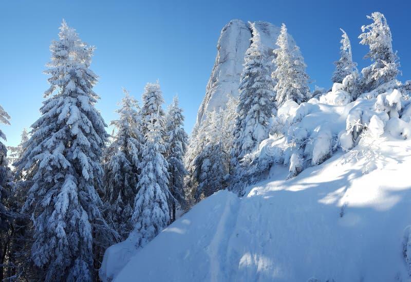 Scena di Winer in montagna di Ceahlau fotografia stock