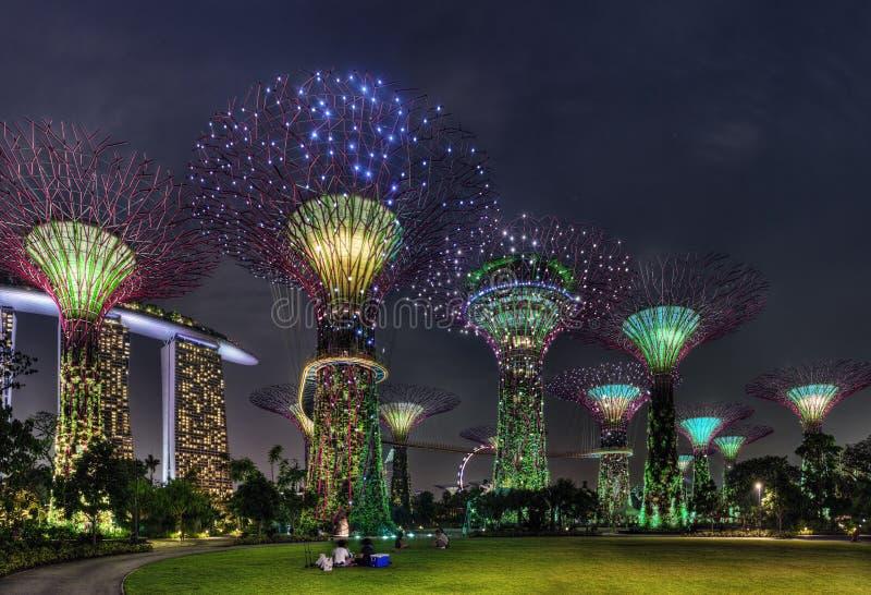Scena eccellente di notte degli alberi ai giardini di Singapore dalla baia immagine stock