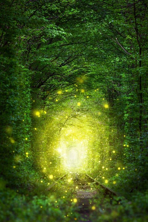 Scena fantastica degli alberi - tunnel dell'amore con luce leggiadramente fotografia stock libera da diritti