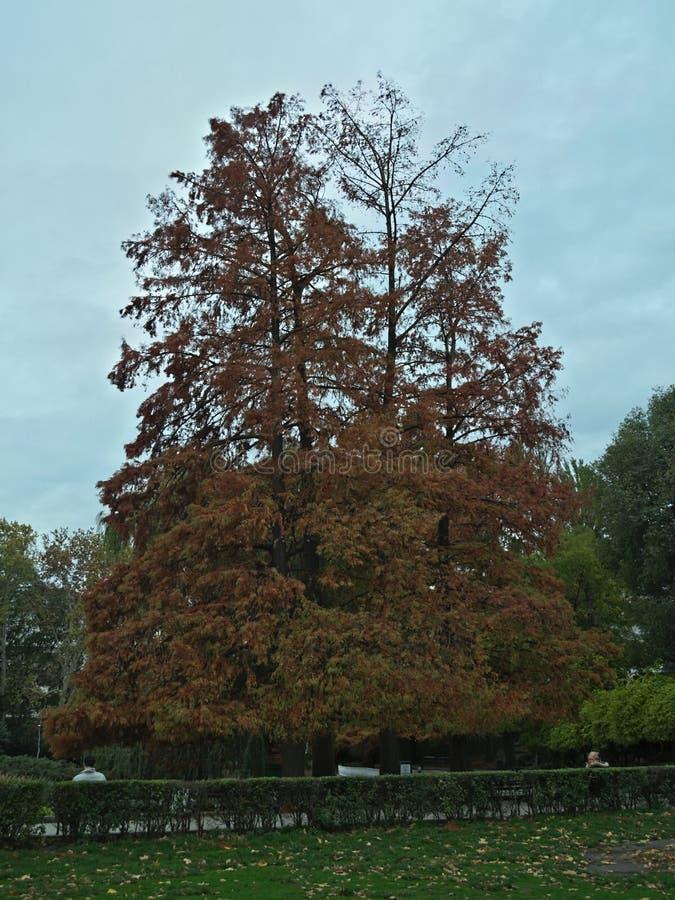 Scena idilliaca in parco con gli alberi e le foglie cadute intorno fotografie stock