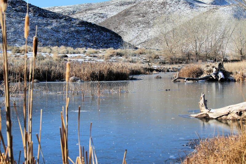 Scena invernale alla prerogativa di McCarran immagine stock