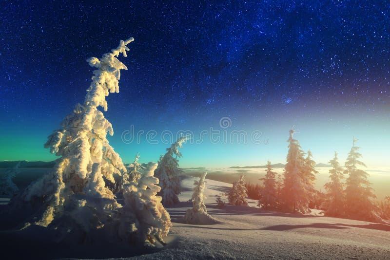 Scena invernale con gli alberi nevosi fotografie stock libere da diritti