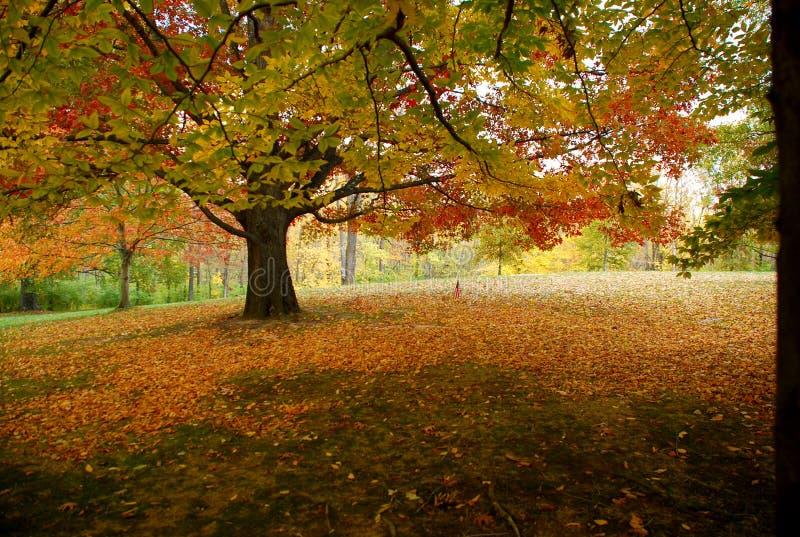 scena jesienią fotografia stock