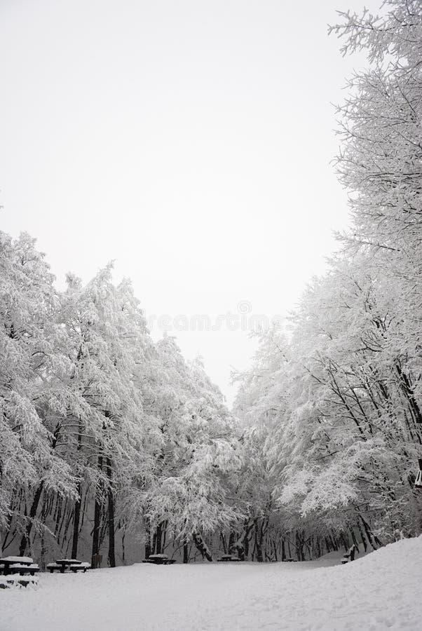 scena leśna śniegu zdjęcia stock