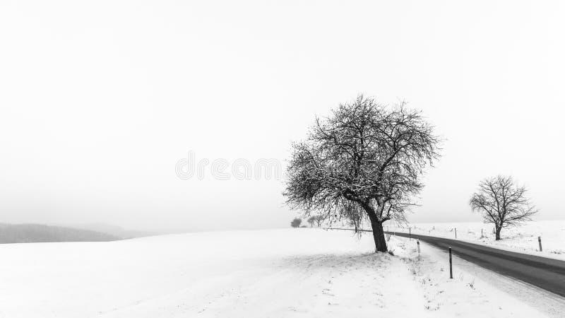 Scena minimalista artistica di inverno in bianco e nero immagini stock