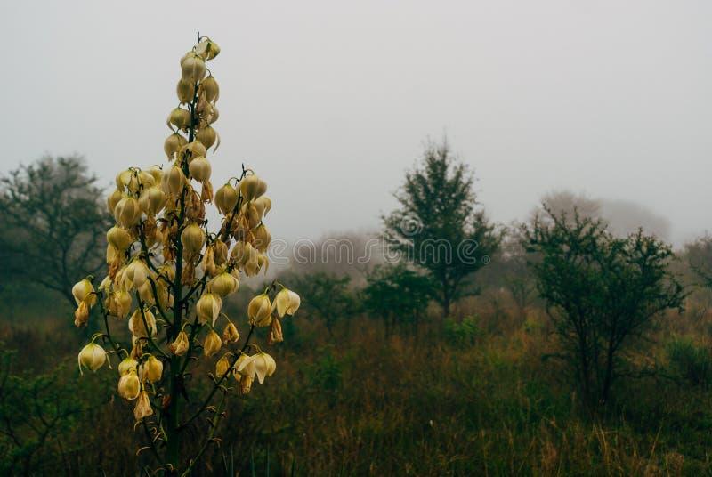 Scena nebbiosa di mattina con i fiori selvaggi fotografia stock