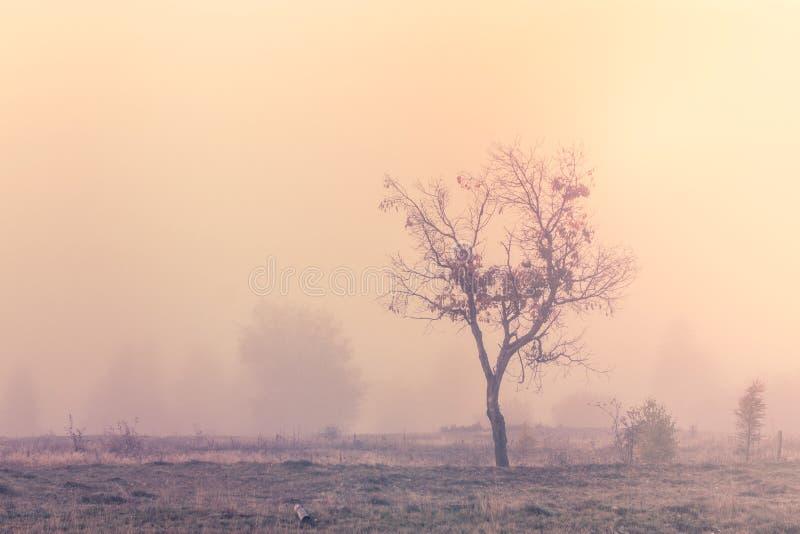 Scena nebbiosa di mattina con l'albero solo fotografia stock libera da diritti