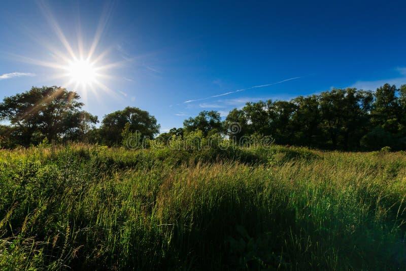 Scena piękny zmierzch przy lata polem z drzewami obrazy royalty free