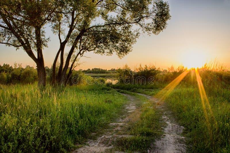 Scena piękny zmierzch przy lata polem z drzewami i trawą zdjęcia royalty free