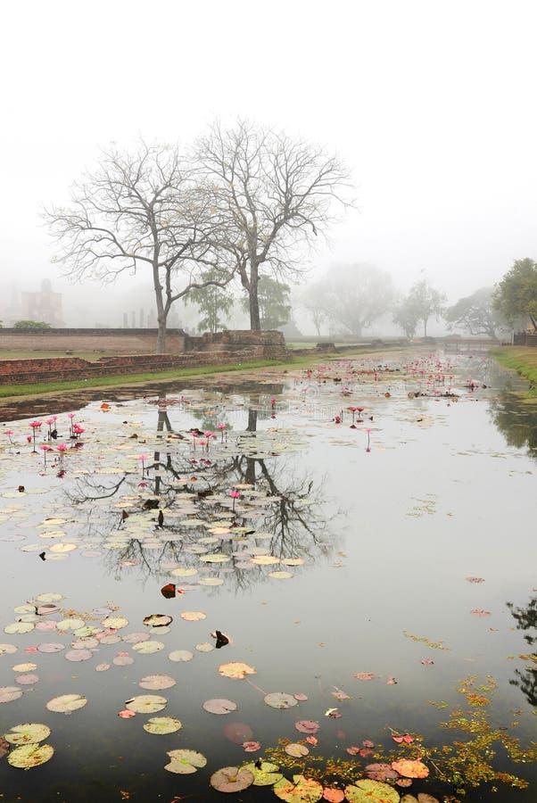 Scena piacevole di primo mattino sul lago immagini stock libere da diritti