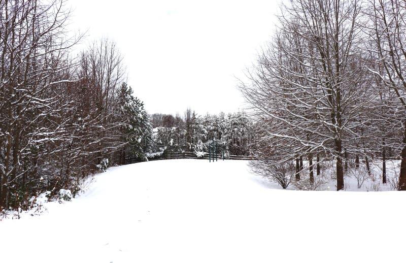 Scena pittoresca della neve nell'inverno fotografia stock