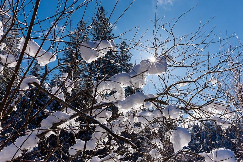 Scena retroilluminata di neve sui rami fotografie stock