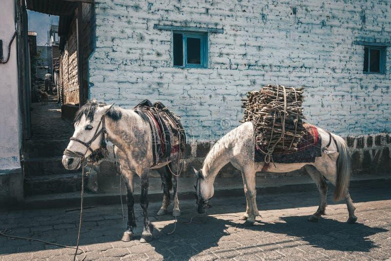 Scena rurale con gli asini nel Guatemala fotografia stock