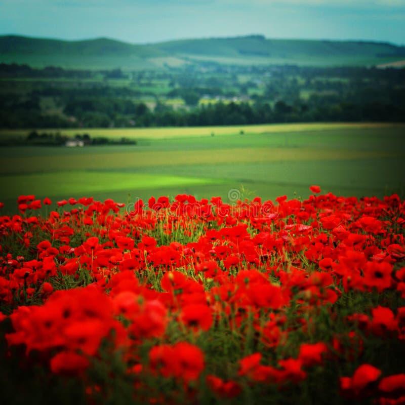 Scena rurale del campo in Wiltshre con i papaveri fotografia stock
