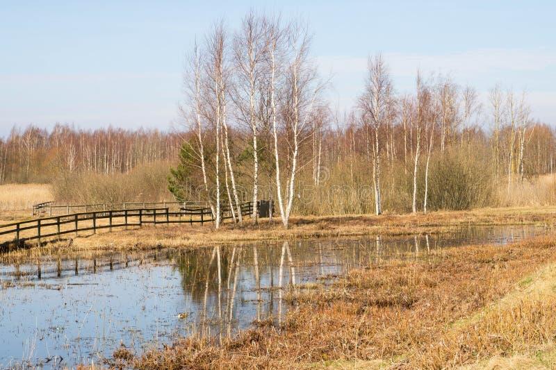 Scena rurale di primavera fotografia stock