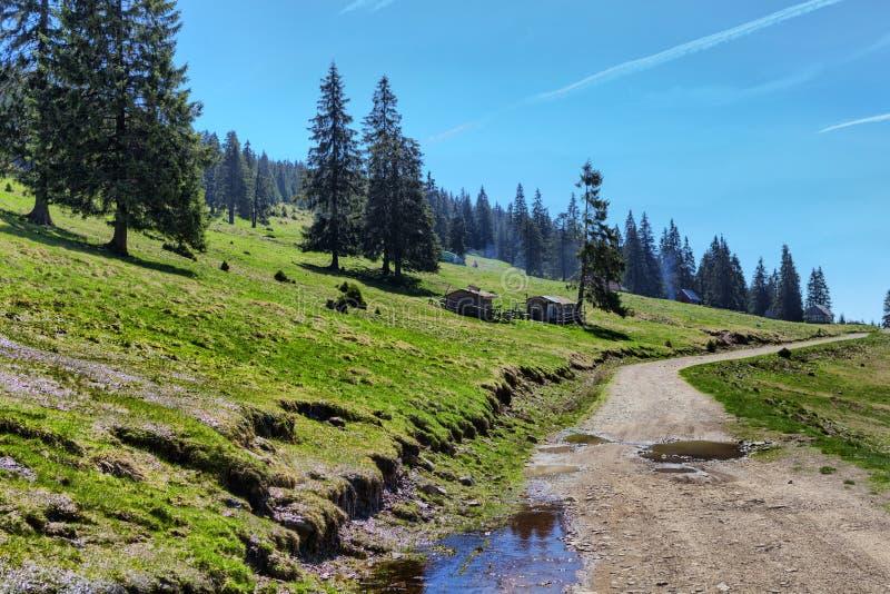 Scena rurale tipica in Padis con paesaggio provinciale in Tarnsylvania immagine stock